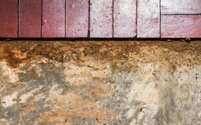 6 Signs of Termites In Your Home