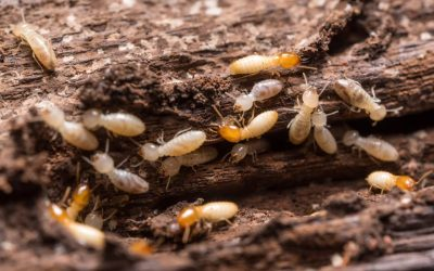 Prevent Termites in the Home